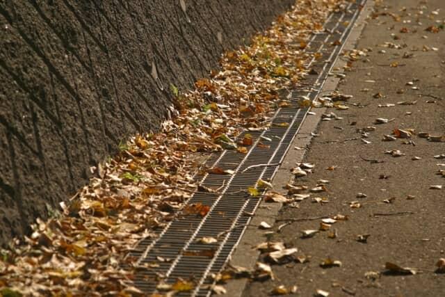 排水溝の周りに落ち葉が落ちている。