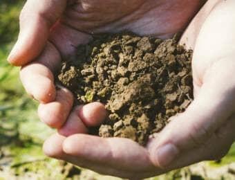 土壌消毒するために土の水分状態を調べている