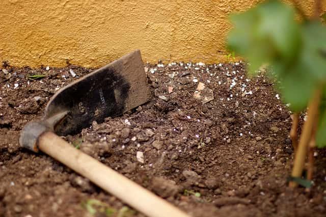 デラウェア栽培のための土作り