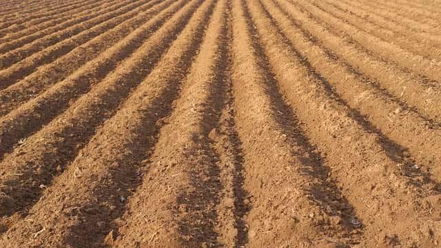 土壌消毒後の圃場の耕起