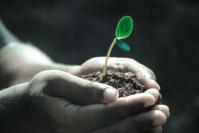 植物、生長