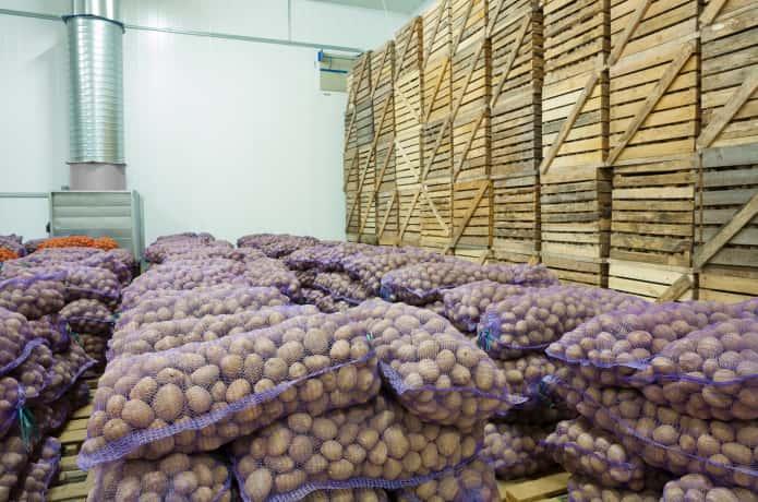 収穫されたジャガイモを倉庫に保管