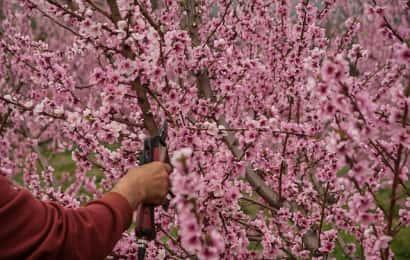 庭の花木を剪定する