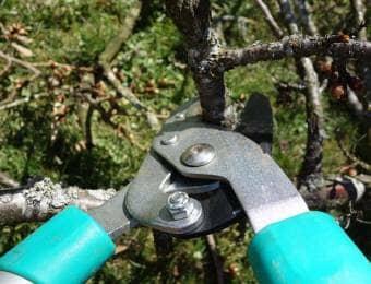 枝を剪定ばさみで剪定する