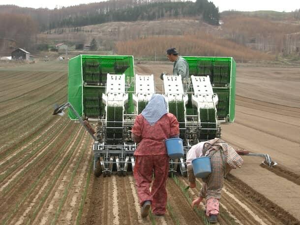 農機を使用したタマネギの苗の植え付け