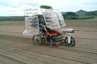 タマネギの苗を農機を使用して移植