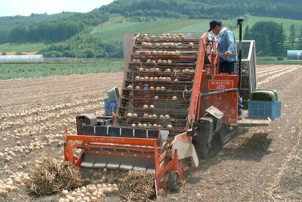 農機を使用して収穫しているタマネギ
