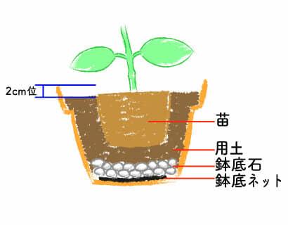 アジサイ 鉢植え手順