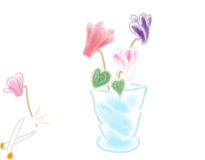 シクラメン 切り花