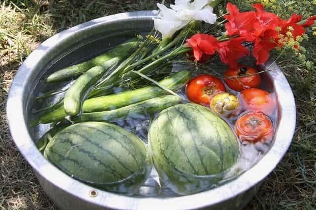 タライに入った野菜