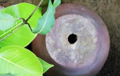 植木鉢の底の穴と黄緑の葉