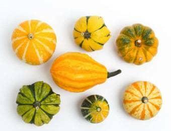いろいろなおもちゃかぼちゃ