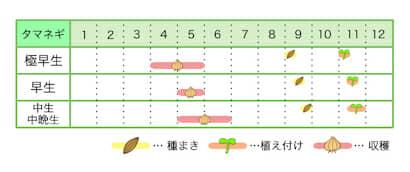 新規就農レッスン 栽培カレンダー タマネギ