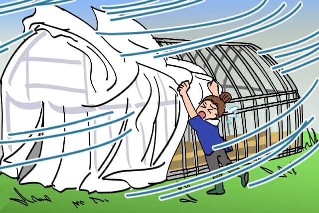 強風の中でビニールハウスを建てる