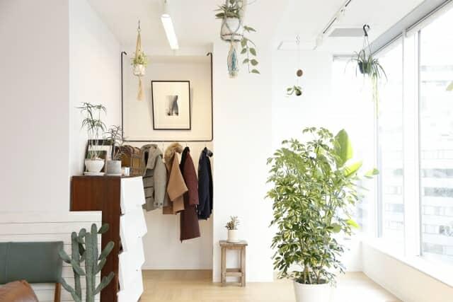 観葉植物のある明るい部屋