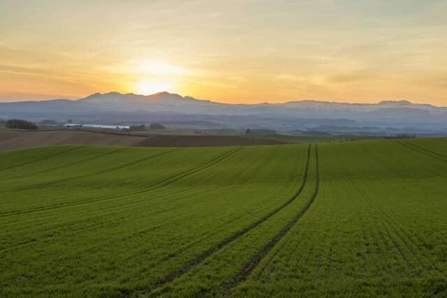 朝焼けの畑