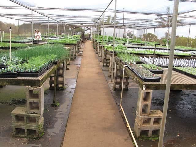 ネギ栽培、育苗