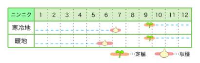 ニンニク新規就農レッスン 栽培カレンダー