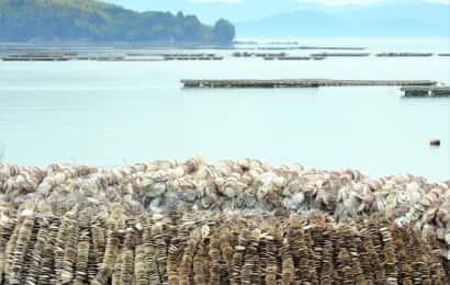 海辺に山積みされたカキ殻