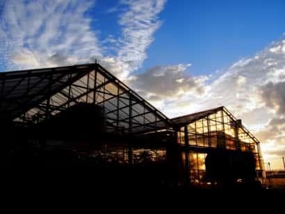 ハウス栽培、夕方