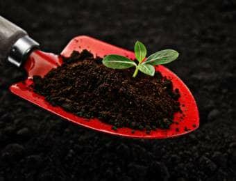 植物のための土づくり