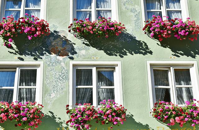 窓辺を彩るゼラニウム