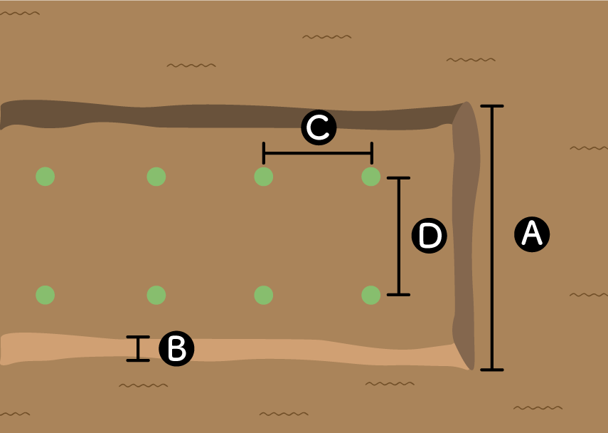 ブロッコリーの畝サイズ