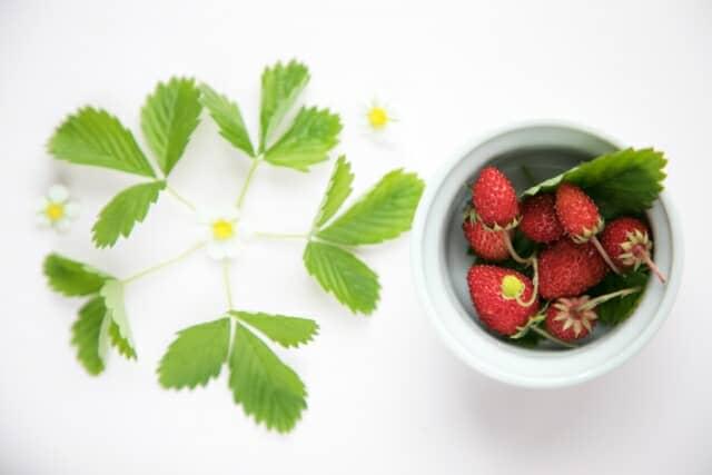 ワイルドストロベリーの実と花と葉