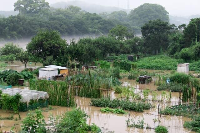 台風被害に遭った畑