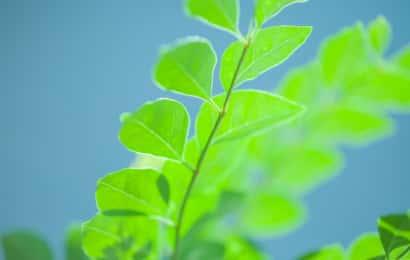 きれいな緑の葉