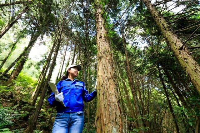 林業をする女性