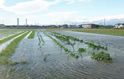 台風、農作物、被害