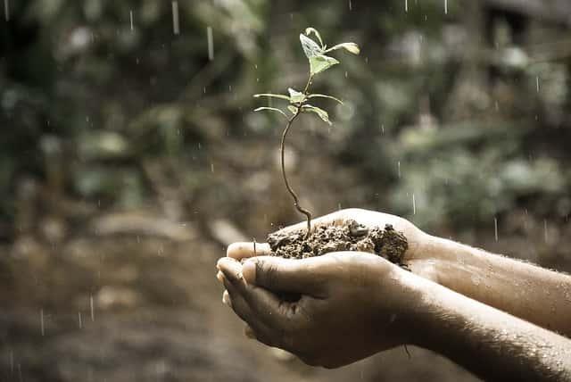 雨の中苗を持つ手