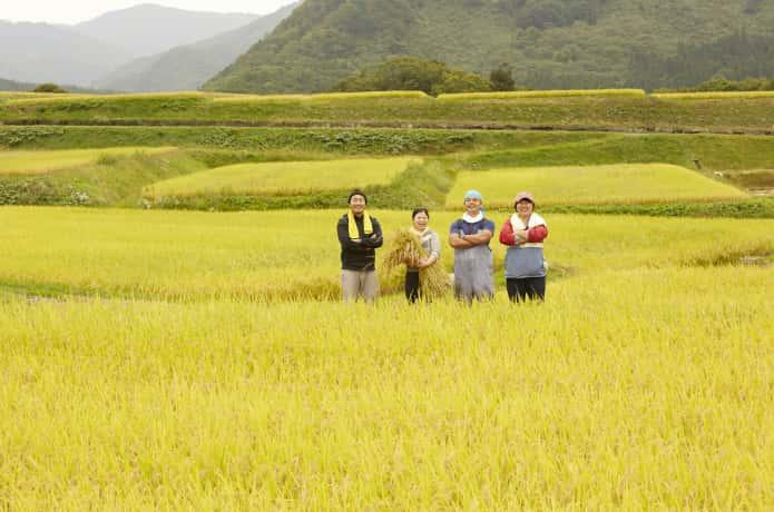 田んぼの中の農家の人