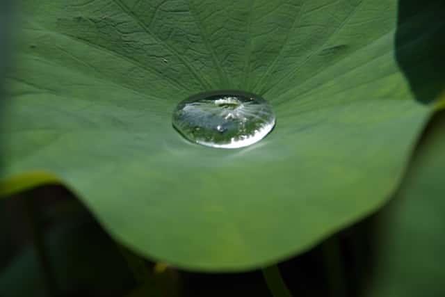 葉 濡れ性