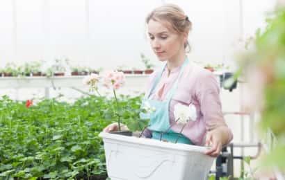 女性が植木鉢を運ぶ