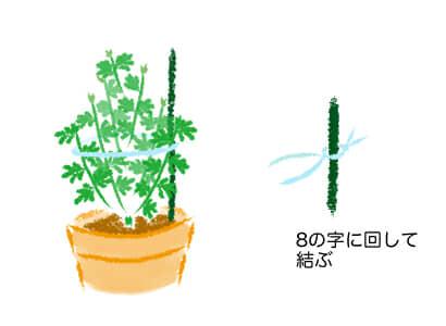 スプレーマム 、スプレー菊、支柱
