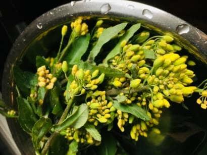 黄色い花が咲いたのらぼう菜
