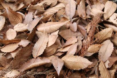 二十四節気、冬、農業、落ち葉集め