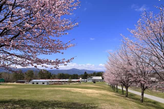 農業大学校の遠景