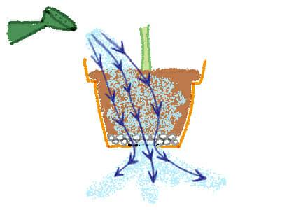鉢植え、水やり