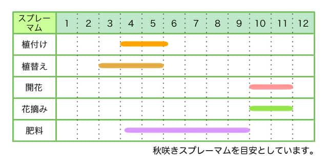 スプレーマム 、育て方、カレンダー