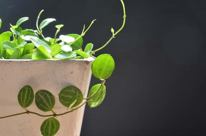 グラスファイバー鉢とグリーン