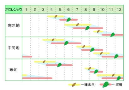 ホウレンソウ 新規就農レッスン 栽培カレンダー