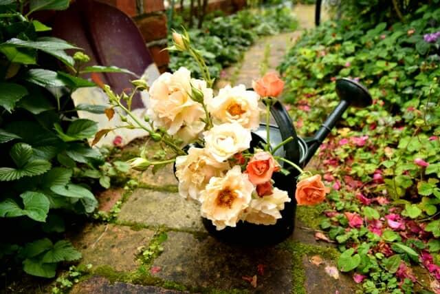 バラがきれいなガーデン