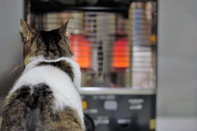石油ストーブで暖をとるネコ