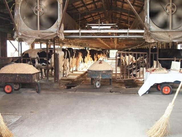 牛舎の中の風景