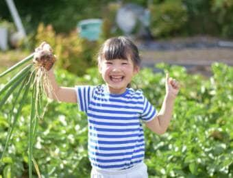 玉ねぎを収穫する子ども