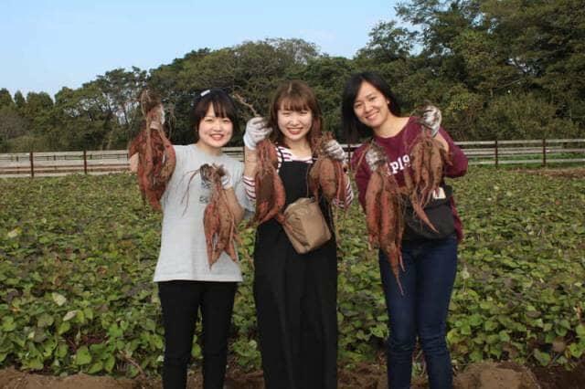 芋ほり体験をする女性3人