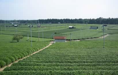 防霜ファンがある茶畑